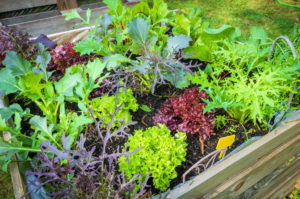 [Urban Gardening Update] Ratingen Ost: essbares Gartenparadies