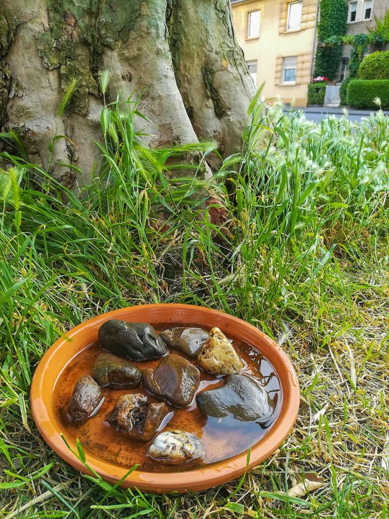 Aufruf zum Aufstellen von Wasserschalen für Wildtiere